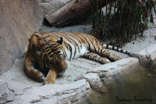 A visit to the San Diego Zoo is a must if you visit Southern Cali.